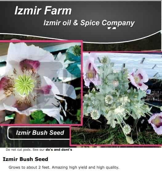 'Izmir Bush' Papaver Somniferum Poppy Seeds - Izmir Farms
