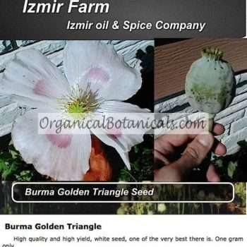 Izmir Golden Burma triangle opium poppy seed