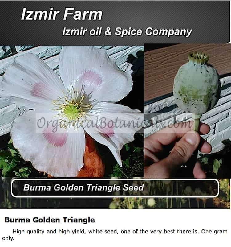 Izmir Golden Burma triangle opium poppy seed
