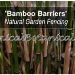 Bamboo Barriers for Gardens