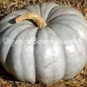 Jarrahdale Squash Blue Moon Pumpkin Hybrid Seed 1h