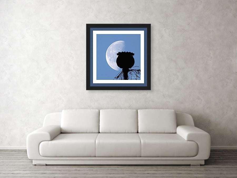 COUCH-poppy-pod-silhouette-lunar-eclipse-of-moon-papapver-somniferum-jordan-w