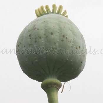 Giant Poppy Seed Mix - somniferum poppies