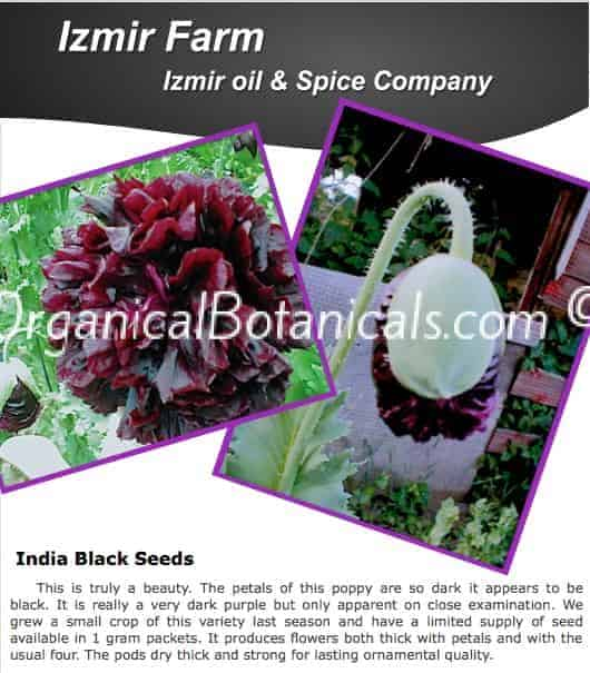 'Izmir India Black' Papaver Somniferum Poppy Seeds