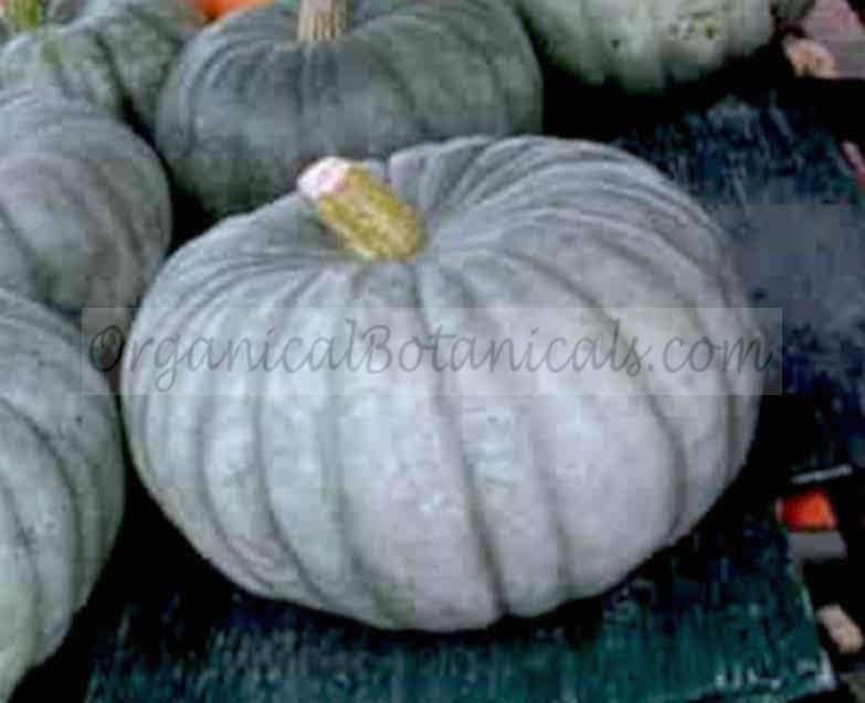 Blue Moon Pumpkin -Jarrahdale Hybrid Squash Seed 1