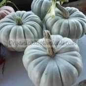 Blue Moon Pumpkin - Jarrahdale Squash Hybrid Seeds