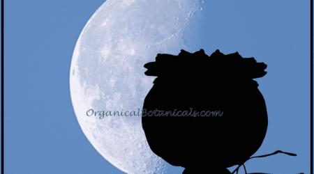 Poppy Silhouette Lunar Eclipse MOON Poppy Image for Wall ©2017 @ OrganicalBotanicals.com