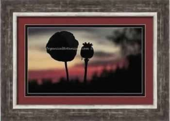 OrganicalBotanicals Framed Print Art Sample