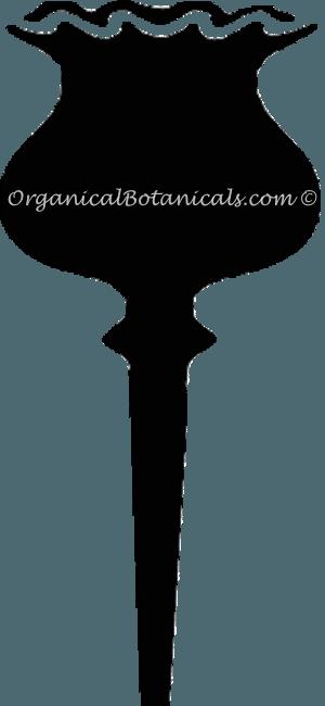OrganicalBotanicals-Poppy Silhouette