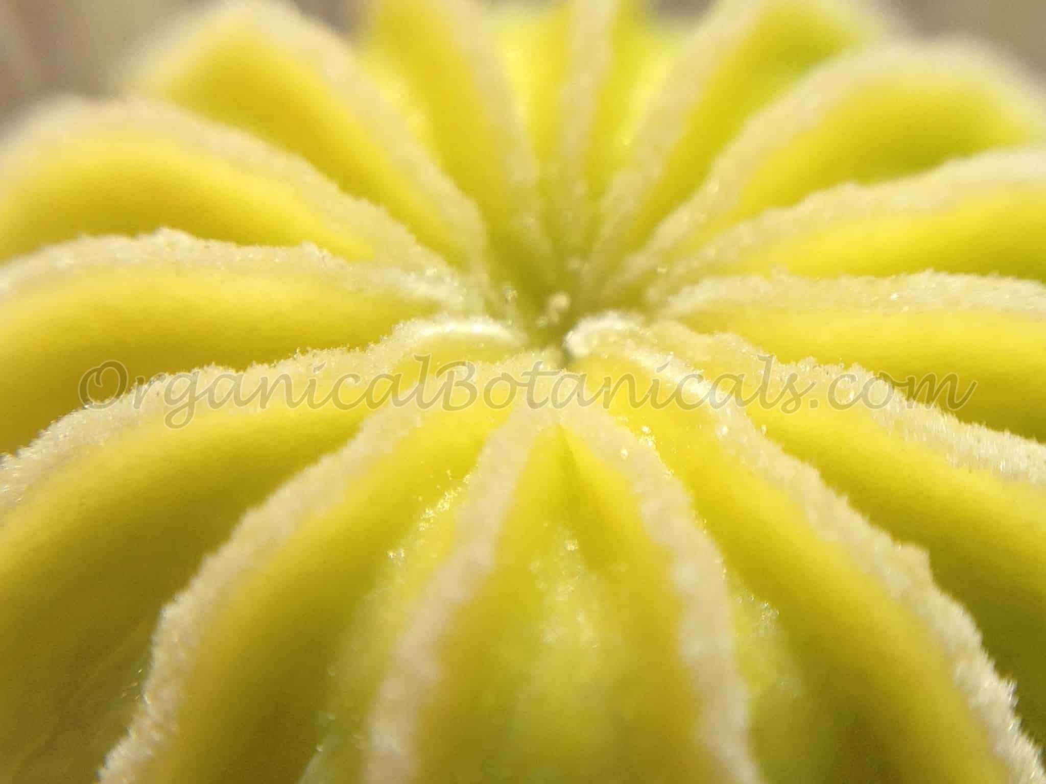 CENTER OF POPPY - Would work as Lemon Poppy Soap