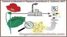 STUDY: Content of Alkaloids in Ornamental Papapver somniferum L. Cultivars, 2017