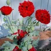 500 'Red Peony' PAPAVER SOMNIFERUM POPPY SEEDS