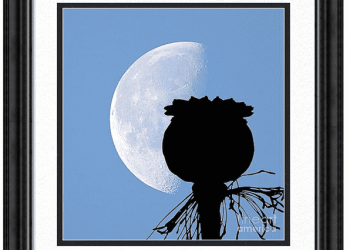 Poppy Moon Silhouette Framed Print