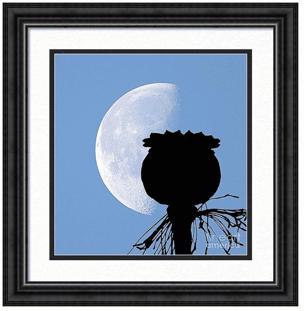 Poppy Moon Silhouette Framed Print