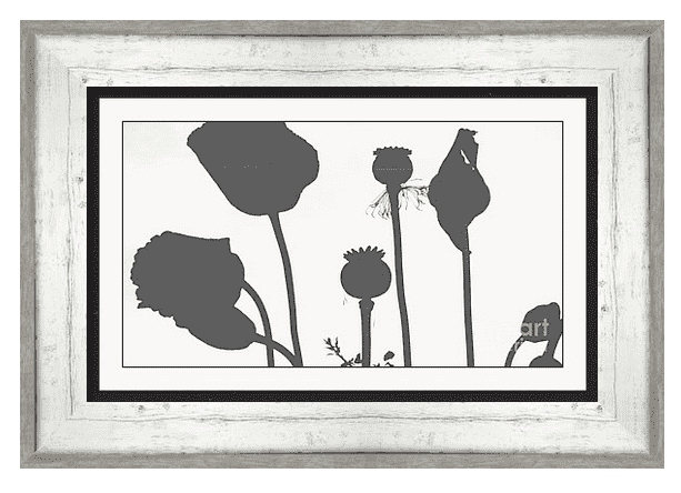 Poppy Silhouettes Framed Print