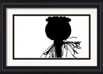 black poppy white sky silhouette