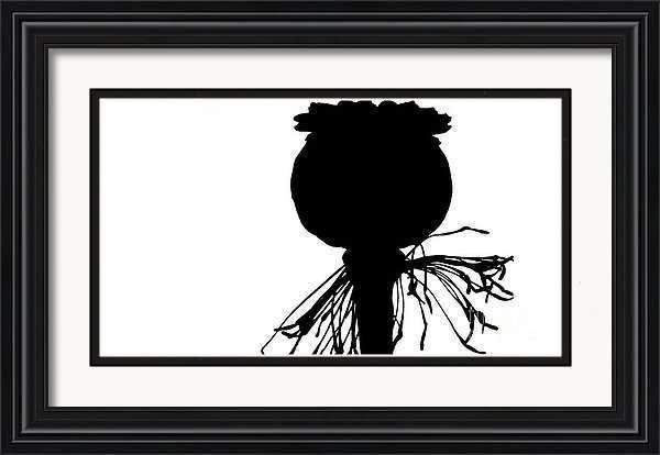 black poppy white sky silhouette