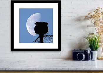 poppy-pod-silhouette-lunar-eclipse-of-moon-11